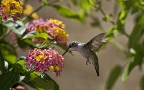 птица, колибри, цветы, листья, солнце
