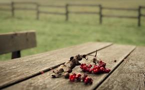 Berries, table, macro