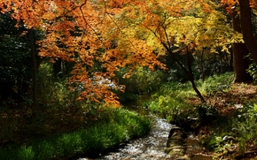 autunno, foresta, torrente