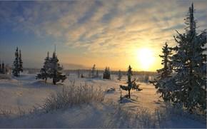 закат, зима.деревья, пейзаж