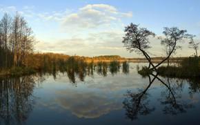 夕日, 川, 木, 風景