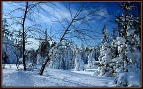 inverno, alberi, foresta, paesaggio