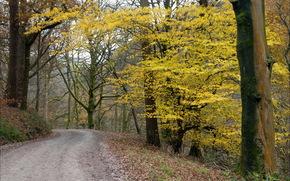 autumn, road, forest, Trees, landscape