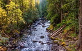 forest, river, stones, landscape