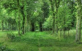 森林, 追踪, 树, 景观