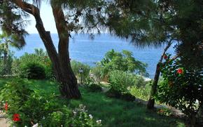 海, 花园stsvetami, 树