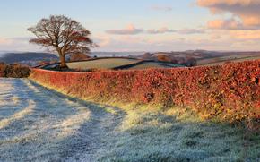 field, bush, frost, tree, clouds