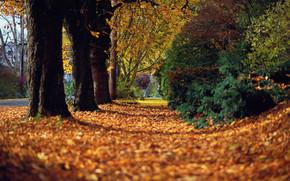 autumn, listyapeyzazh, nature, tree, forest, beauty