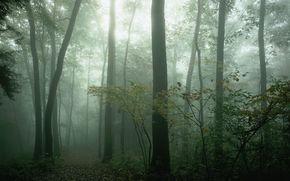 paesaggio, natura, albero, foresta, bellezza