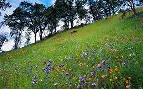 paesaggio, natura, albero, foresta, bellezza, fiori, prato