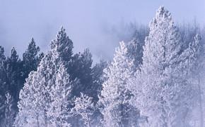 пейзаж, природа, дерево, ёлка, лес, красота, зима, снег