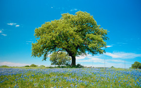пейзаж, природа, дерево, поле, красота