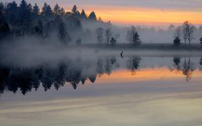 закат, туман, лес, водаём