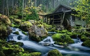 fiumicello, torrente, mulino ad acqua, pietre, foresta, paesaggio