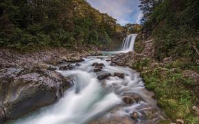 Tawhai Falls, nouvelle-zlande, Nouvelle-Zlande, cascade, rivire, fort, noyaux