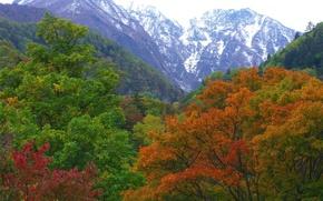 natura, Montagne, foresta, natura, paesaggi, Montagne, autunno