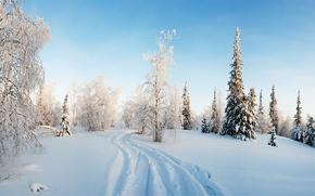 природа, пейзаж, зима