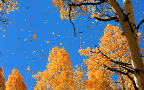 nature, autumn, sky, foliage