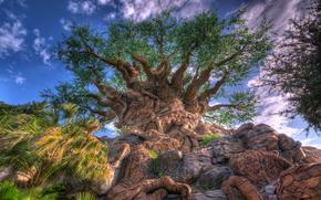 albero, insolito barile esotico, Rocks, pietre, cielo, paesaggio