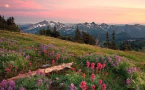 Montagnes, pente, lgumes verts, Fleurs, ciel, soleil