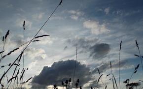 jesie, niebo, chmury, trawa