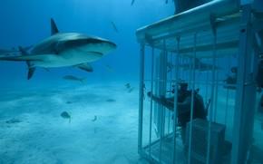 mare, profondit, vita marina, squalo, tuffatore, esca