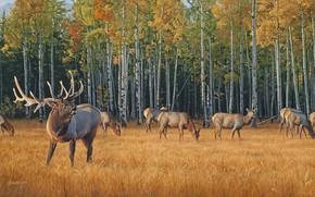 живопись, осенний лес, олени, стадо, желтая трава, осень