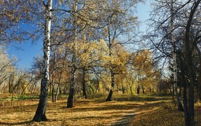 森林, 秋天, 性质