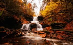 river, forest, autumn