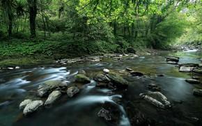 река, лес, лето