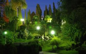 黄昏, 公园, 树, 灯火