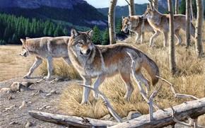 живопись, волки, стая волков, гора, лес, сухая, желтая трава, осень