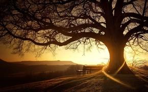многолетний, дуб, дерево, скамейка