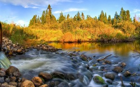 forest, panorama, river, pipe, sink, stones