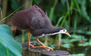 bird, Hemp, swamp, leaves