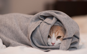 кошка, одежда, спряталась, морда
