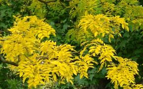 осень, ветви, деревья, листья, жёлтые, яркие краски