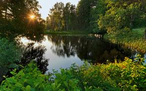svartа, nаrke, sweden, Швеция, озеро, лес, деревья, пейзаж
