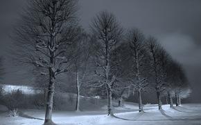 notte, alberi, inverno