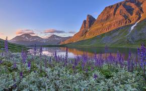 norway, Норвегия, озеро, горы, цветы, пейзаж