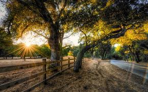 道路, フェンス, 風景