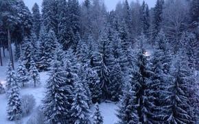 snow, Trees, New Year, Rybinsk, Kstovo