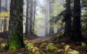 лес, природа, пейзаж