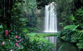 водапад, речка, деревья, нейзаж