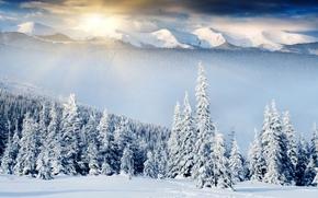 зима, снег, лес, пейзаж