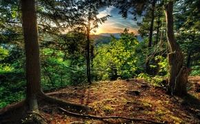 закат, лес, пейзаж