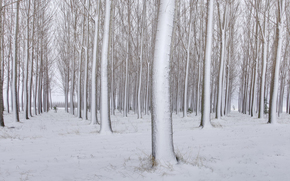 forest, Winter, Trees