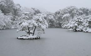 invierno, Los rboles, nieve, estanque, isleta