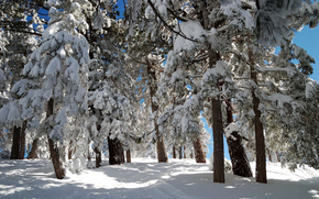 Winter, snow, trees in the snow