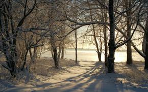 зима, деревья, снег